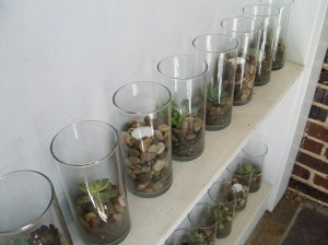 Terrariums on Shelves