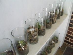 Terrariums on Shelves